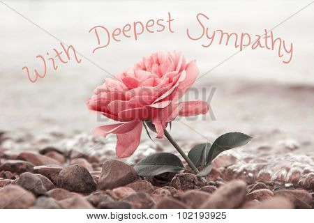 One Rosy Rose Flower At The Stony Beach, With Sympathy Text