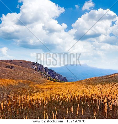 Field in the mountains.