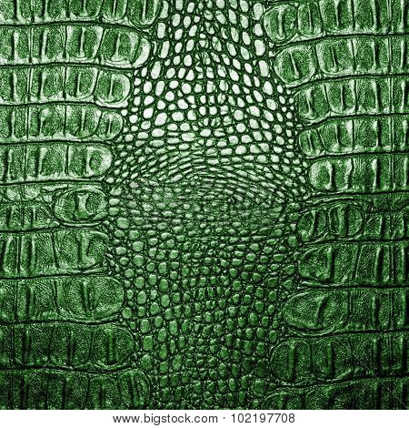 Green crocodile leather texture closeup background.