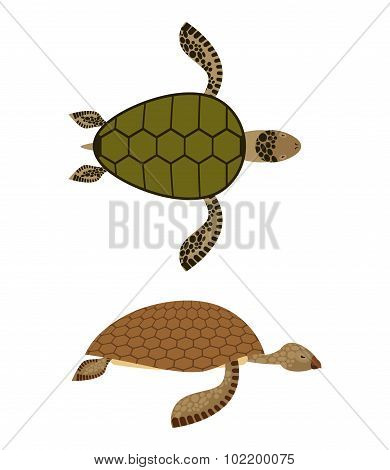 Set Water Turtle. Side View And Top View. Deep-sea Animals. Marine Reptiles With Shells. Vector Illu