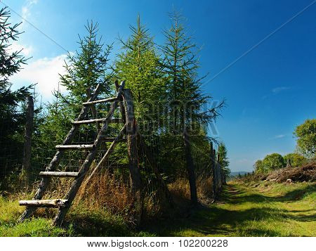 Ladder in Forest in Krusné Hory mountains