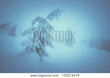 Winter landscape with snowy fir tree. Christmas view. Beauty in nature. Color toning. Low contrast