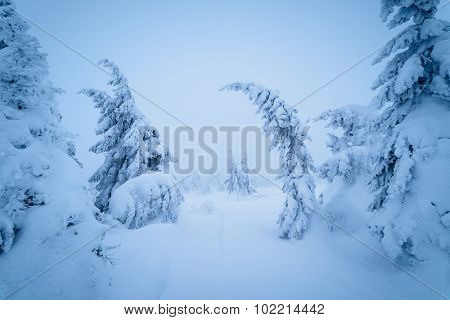 Fairytale Christmas landscape. Winter in the mountain forest. Beauty in nature. Color toning