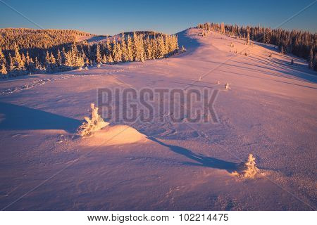 Christmas landscape. Fir trees under the snow. The light of the rising sun
