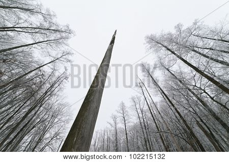 Cloudy day in the forest. The trunk of a dead tree