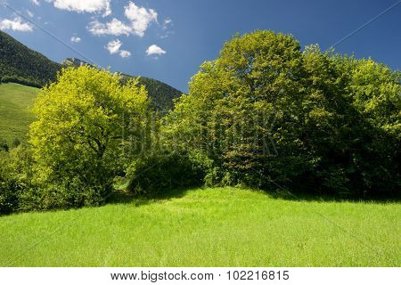 Mountain and meadows in Aspe Valley, France.