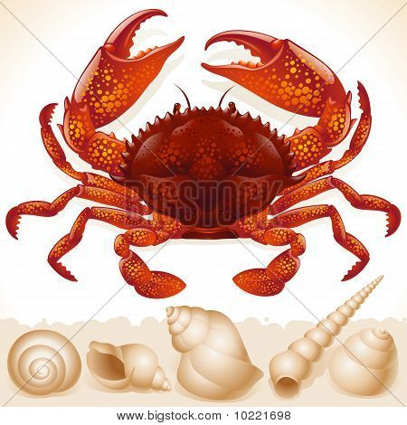 Red crab and few seashells