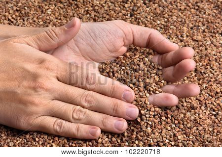 Hands With Buckwheat