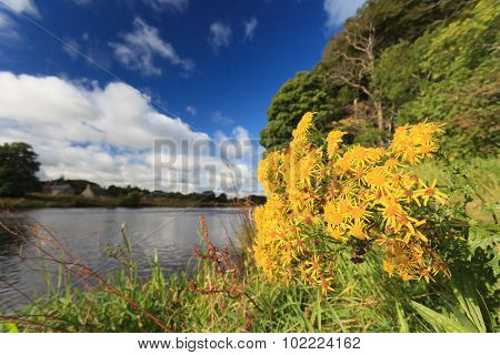 Beautiful Flower And Scene Of River Dee - Aberdeenshire Aberdeen Scotland, Uk.