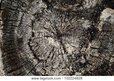 Burnt Tree Log Linden Wood Texture Background