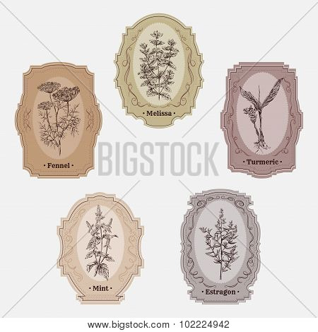 Collection of vintage storage labels with herbs and spices. Melissa, turmeric, estragon, mint, fenne