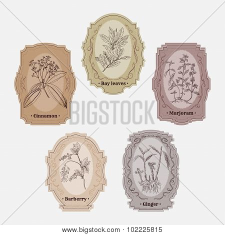 Collection of vintage storage labels with herbs and spices.bay leaves, marjoram, ginger, barberry, c
