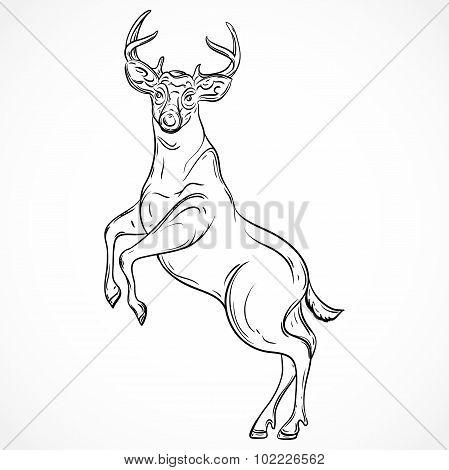 Deer standing on hind legs. Vintage vector hand drawn illustration in sketch style.