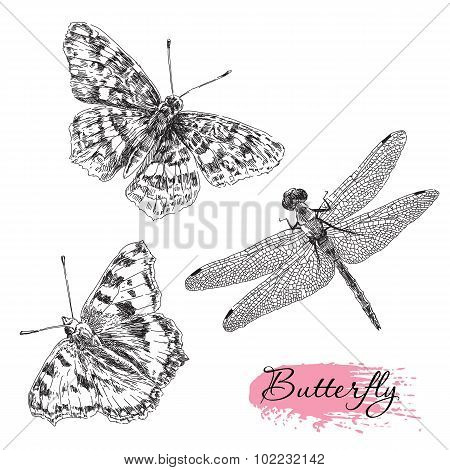 Vector set of hand drawn butterfly and dragonfly