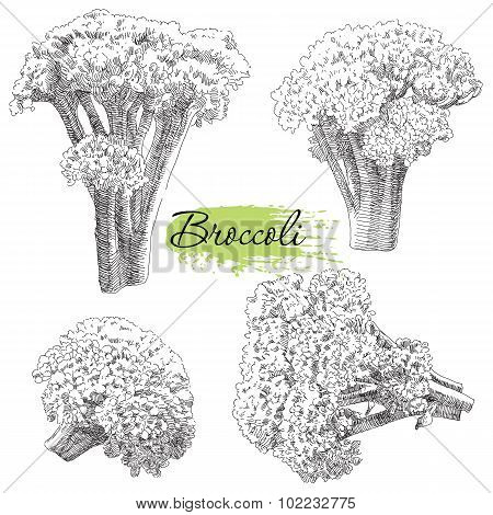 Vector set of hand drawn broccoli