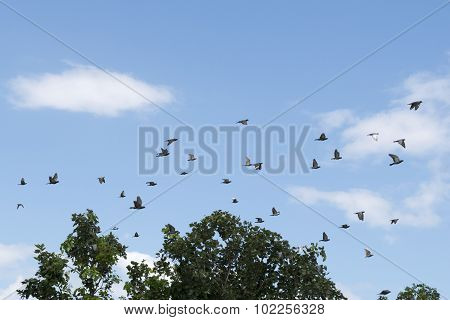 Pigeons were flying in the blue sky.