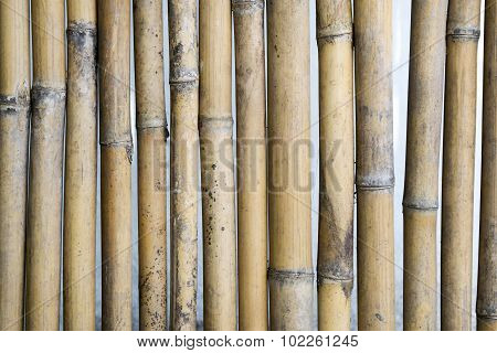 Old grunge bamboo trunk wall  texture background