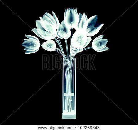 Xray Image Of Tulip Flowers Isolated On Black