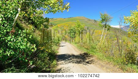 Road Through The Yellow And Green Aspen During Foliage Season