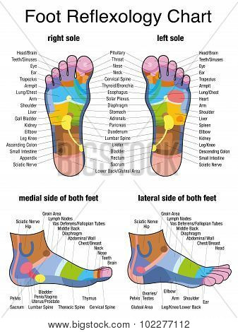 Reflexology Plantar Sole Profile Feet