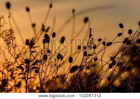 Grass Burnet Sunset Background