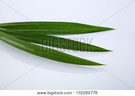 Pandanus leaves, isolated on white background