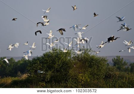 Flock Of Waterfowl Flying Low Over The Marsh
