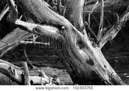 Nature Abstract  - Gnarled And Weatherworn Driftwood