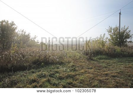 Uncultivated field