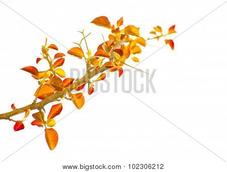 Color Edited Fantasy Isolated Plant