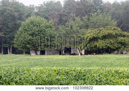 Green Summer Field