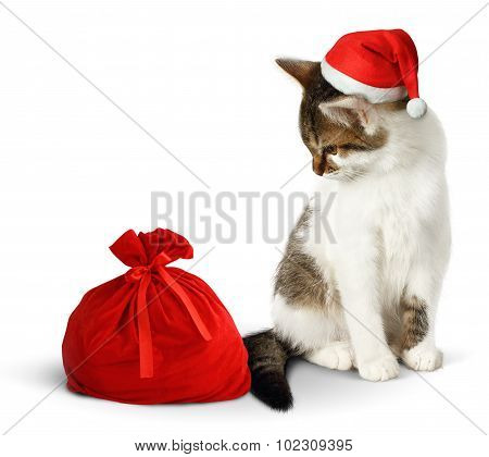 Funny Cat With Santa Hat And Sack On White