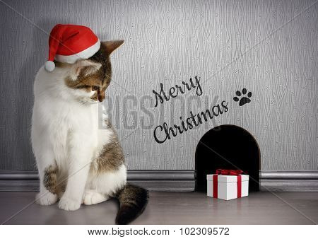 Xmas Congratulate Concept, Funny Cat With Santa Hat And Gift