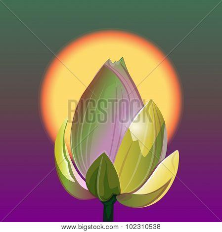 Lotus And Sunrise