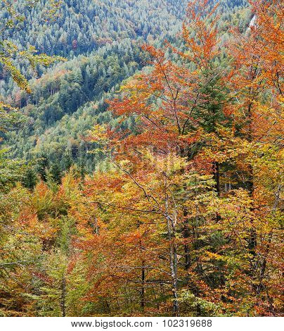 Deciduous Forest In Autumn Colors