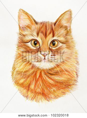 Hand drawn red cat. Illustration drawn with colored pencils. Design for T-shirt.
