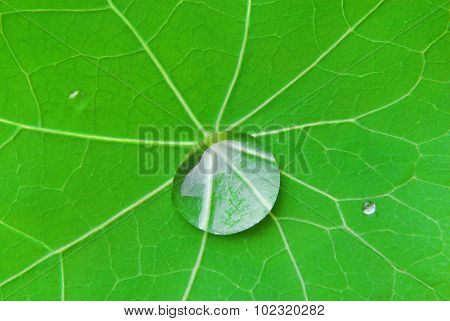 close up of the drop on the leaf