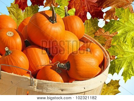 Bushel Basket of Pumpkin Minis with abstract Autumn Leaves background