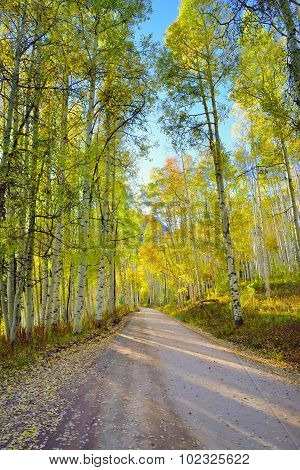 Rural Road With Tall Yellow And Green Aspen During Foliage Season