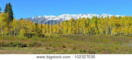 Panoramic View Of The Alpine Scenery Of Yellow And Green Aspen And Snow Covered Mountains During Fol