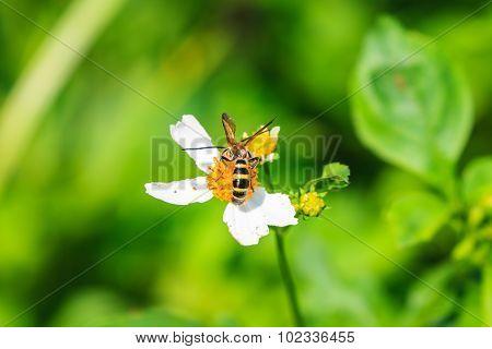 Bee Sitting On Wild Flower