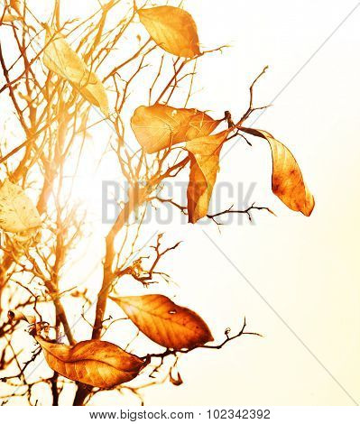 Image of golden dry autumn leaves background, bright september day, warm yellow sunlight through old brown autumnal foliage, beautiful tree branch in fall, seasonal change, beauty of nature