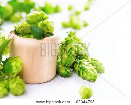 Fresh whole hops in wooden bowl on white table. Green Blossoming hops with green leaves close up isolated over white background. Beer ingredients. Beer brewery concept. Alternative medicine