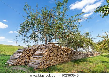 Big woodpile under an apple tree