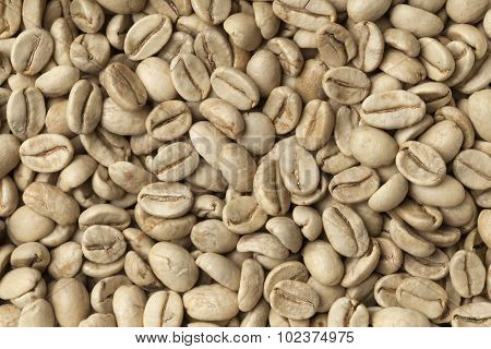 Malabar green unroasted coffee beans from India full frame