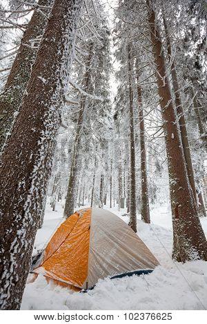 Orange Tent In Winter Forest