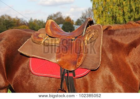 Ridding Saddle On A Brown Horse.