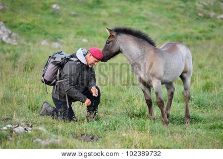 cute foal on mountain pasture and photographer tourist
