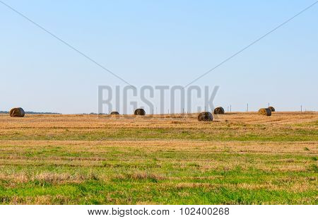 Meadow with rolls of straw during sunset time. LIthuania