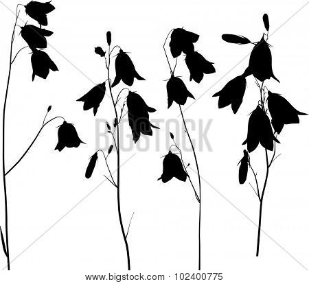 illustration with black campanula flowers isolated on transparent background